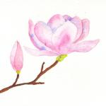 Magnolia - Hand painted watercolor  $7